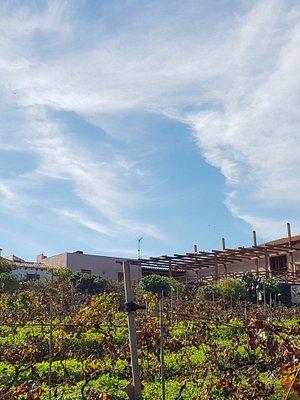 Bodega el Lomo Tenerife