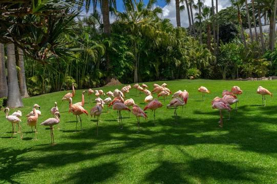 Loro Parque Tenerife 2